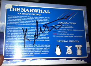Photo of Signed Narwhal
